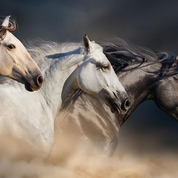 Produits pour chevaux